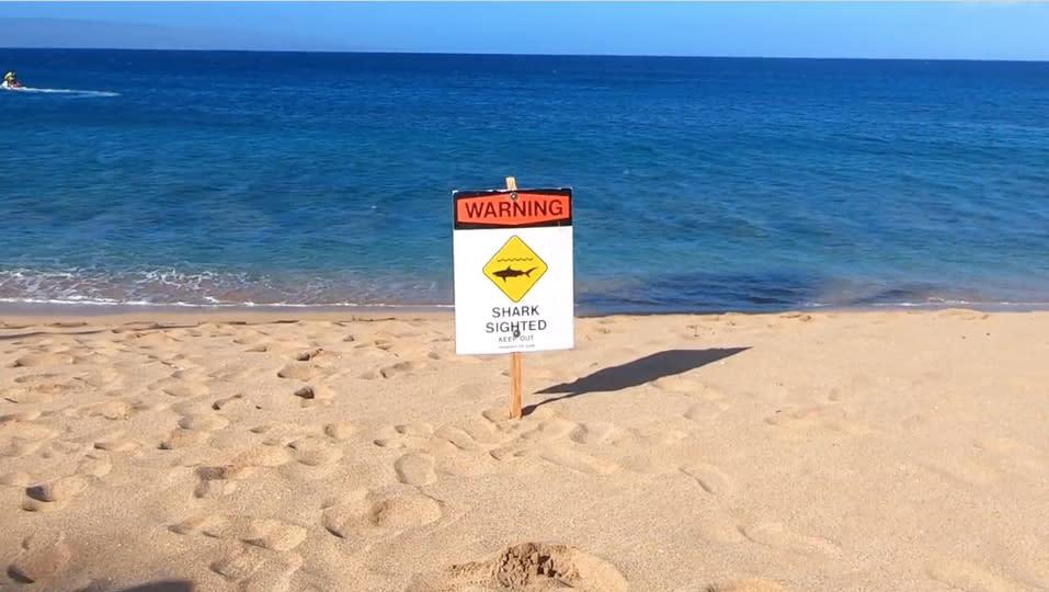 Snorkeler Injured In Shark Attack In Hawaii