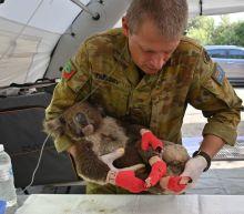 Australia's Kangaroo Island is looking for volunteers to feed animals injured in bushfires