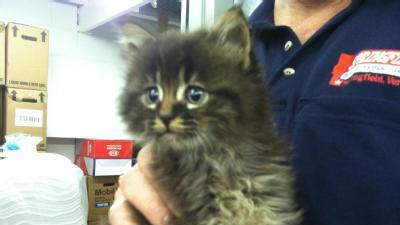 Kitten Found In Car Air Filter
