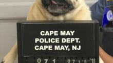 Police post mugshot of lost dog, bail paid in cookies