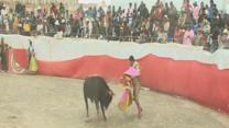 Bullfighting With Some Comedic Relief in Bolivia