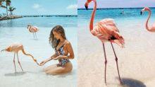 今季最多 Like 的時尚照片,不能缺少一隻 Flamingo!