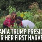 Melania Trump Presides Over Her First Harvest of White House Garden That Michelle Obama Planted