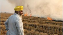 Stubble burning: Why it continues to smother north India