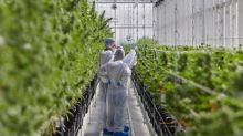 Tilray® Boosts International Export Capacity with Manufacturing License and GMP Certification at EU Campus