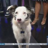 Downtown hotel pampers pooches for National Dog Day