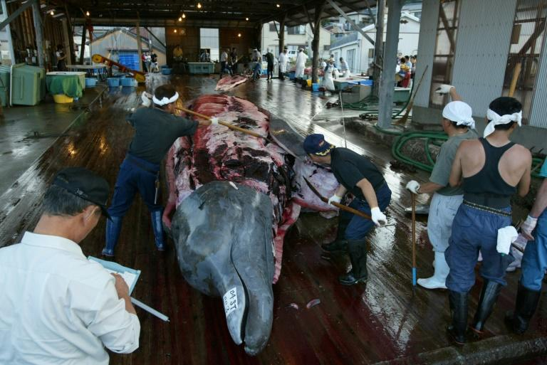 Japan resumes commercial whale hunting after 31 years