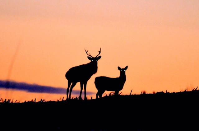 Fujitsu wants to fix Japan's deer problem with software