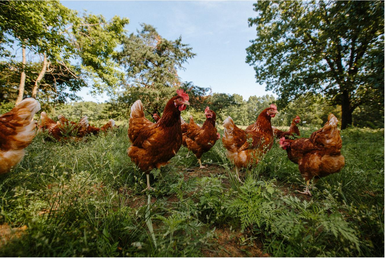 How the coronavirus is impacting egg, dairy demand in America