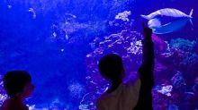 La importancia de los zoos y acuarios para la conservación