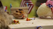 Tiny Hamster's Fourth of July BBQ Is All Types of Cute