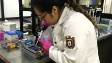 Mexicanos buscan prevenir cáncer gástrico a través de análisis de bacteria