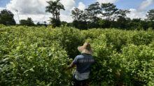EEUU dice que Colombia redujo cultivos de coca por primera vez desde 2012