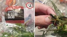 'Sharp spike': Woman's prickly find in Coles salad