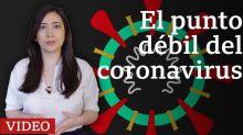 El punto débil del coronavirus que encontró una científica mexicana (y cómo puede servir para neutralizarlo)