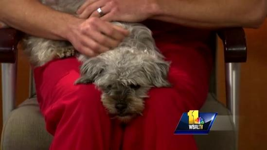 Dec. 6: Holiday-related pet questions answered