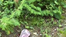 Is it 'kind' to leave a painted rock behind? Ontario Parks says 'no'