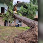 Man Survives After Tree Falls on His Lap in Washington Apartment Building
