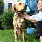 Growing Old Is Better With a Pet. Here's Why
