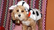 Americans are spending almost half a billion on Halloween costumes for their pets