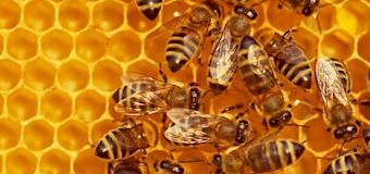 Iowa boys charged in death of 500,000 honeybees