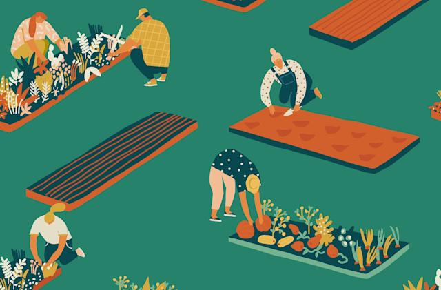 The influencers of pandemic gardening