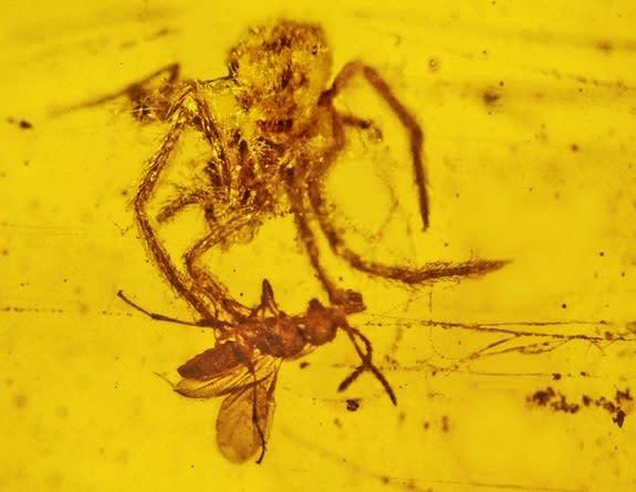 100-Million-Year-Old Spider Attack Found in Amber