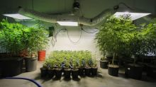 Scotts Miracle-Gro Tests Whether It Can Make Pot Grow Too