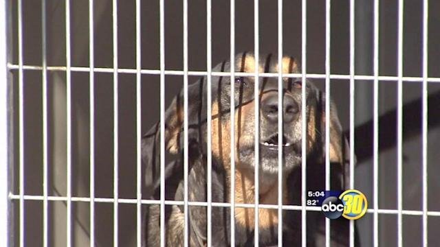 Fresno faces higher costs and no animal control alternative