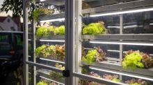 Automat für frischen Salat