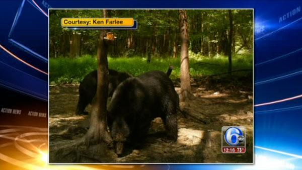 Bears spotted in West Amwell, N.J.