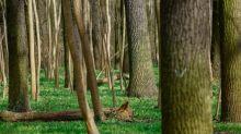 Schulze fordert Umsteuern in der Waldpolitik