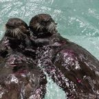 These 2 adorable rescued sea otter pups need names