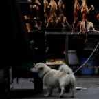 China reclassifies dogs as pets, not livestock, in post-virus regulatory push