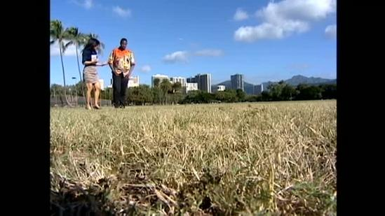 Hawaii attempts to make record-breaking peace sign