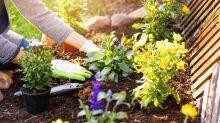 Jardinagem para principiantes: dicas básicas para ter um jardim em casa