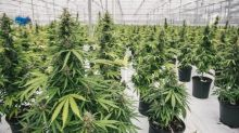 This Marijuana Stock CEO Recently Revealed His Plans to The Motley Fool