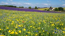 Ken Thompson: how buttercups can teach you the age of a meadow