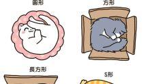 漫畫 [貓奴的日常] 貓貓的百變形狀