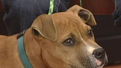 Noon Pet Of The Week: Murphy