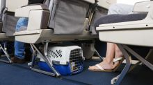 'The system is clearly abused': Why 2018 was a terrible year for emotional support pets on planes