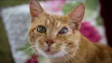 People won't adopt this cat because of the groovy scar on his face