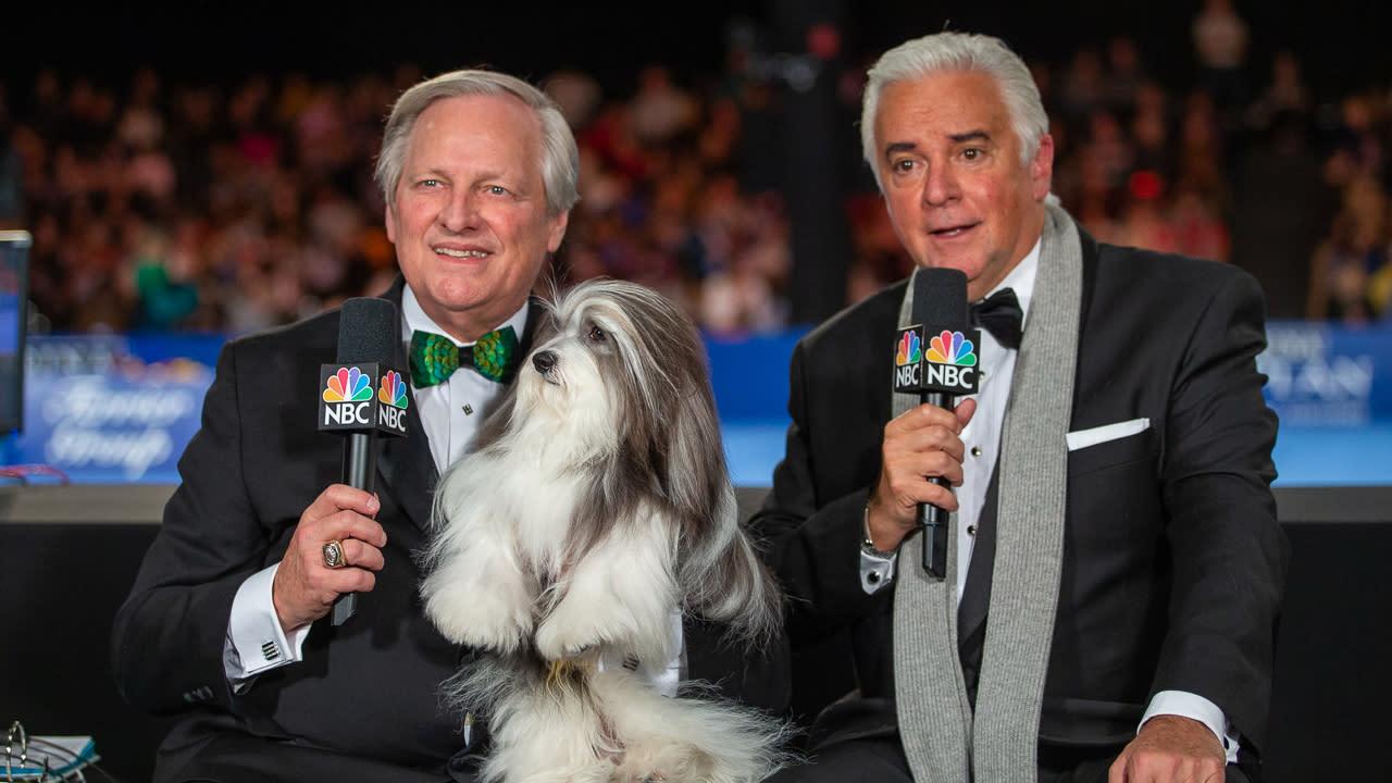 national dog show 2020 - photo #30