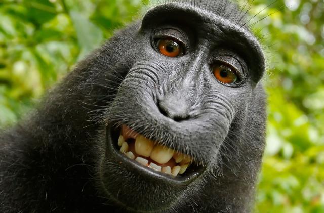 Monkey selfie copyright battle ends with a settlement