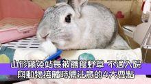 山形縣兔子站長被餵食野草 不適入院 與動物接觸時需注意的4大要點