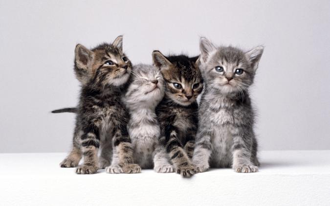Four grey and beige kittens pose shoulder-to-shoulder for the camera.