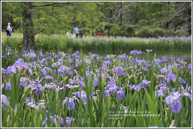 雲山水植物農場鳶尾花-2018-04-10.jpg