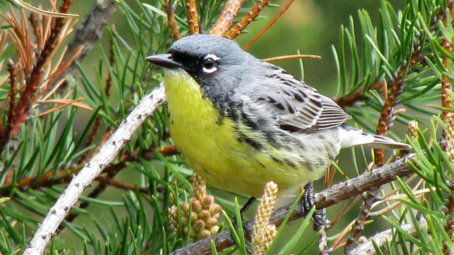 Bird numbers plunge in North America