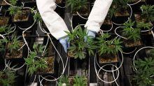 Tilray Ready to Move Into U.S. Cannabis If Farm Bill Passes