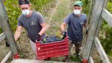 Fra i lavoratori rumeni che sostengono l'agricoltura italiana